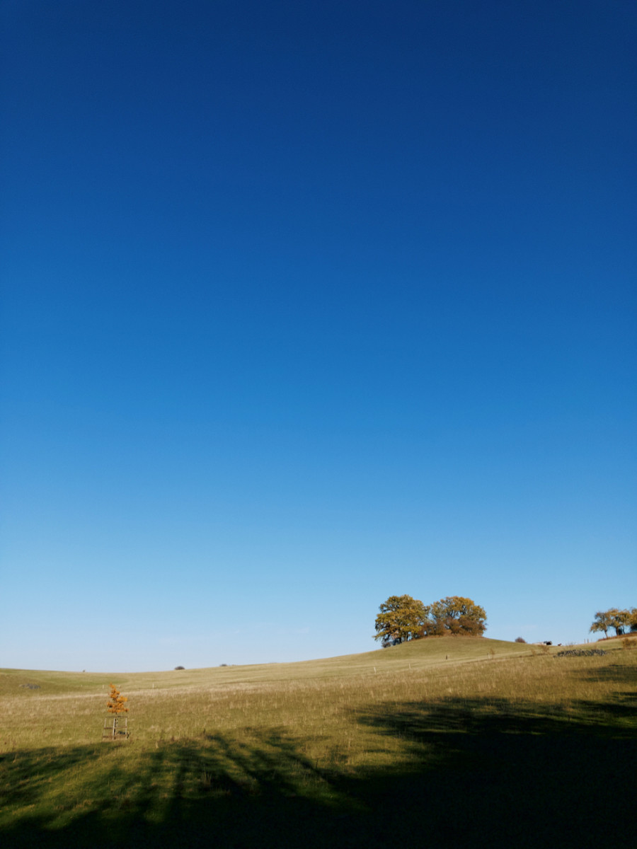 Green meadow with some trees on the horizon and bright blue sky